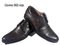 Туфли мужские классические  натуральная кожа коричневые на шнуровке  (563 кк), фото 1