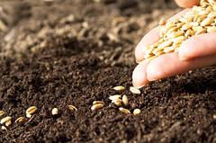 Сроки и способы посева, посадки, нормы высева