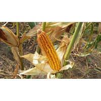 Насіння кукурудзи НС 101 (ФАО 280)