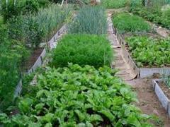 Площади питания растений. Уплотненные и повторные посевы