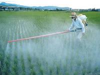 Общие приемы ухода за овощными культурами