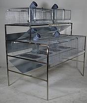 Клетка для Кроликов до 20 голов, фото 2