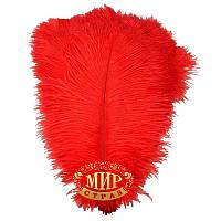 Перо страуса, цвет красный, размер 40-45cм* 1шт.