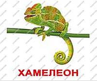 Карточки большие ламинированные «Экзотические животные»