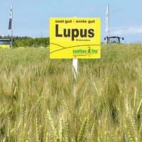 Семена озимой пшеницы Лупус, ( Австрия) Элита