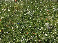 Мавританский (Альпийский) газон
