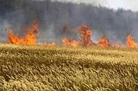 Пожар на Прикарпатье уничтожил посевы зерновых