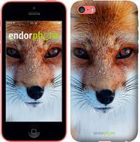 "Чехол на iPhone 5c Рыжая лисица ""3403c-23-4848"""