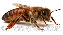 Маркер для метки пчелиных маток (красный 2018), фото 3