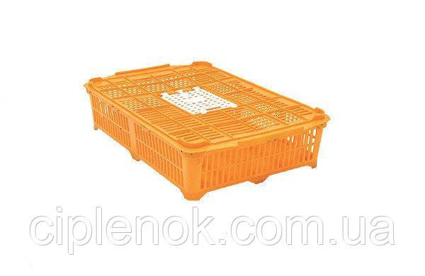 Ящик для перевозки перепелов Quail Coop