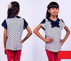 Школьная блуза Жабо к\р Горох
