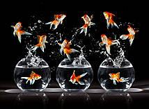 Фотообои: Рыбки в аквариуме