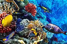 Фотообои Разноцветные рыбки