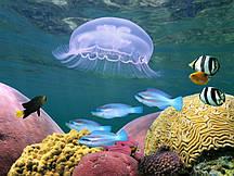 Фотообои Прозрачная медуза
