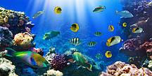 Фотообои Яркое дно океана