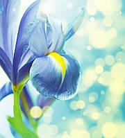 Фотообои: Голубой цветок