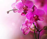 Фотообои: Чудесные орхидеи
