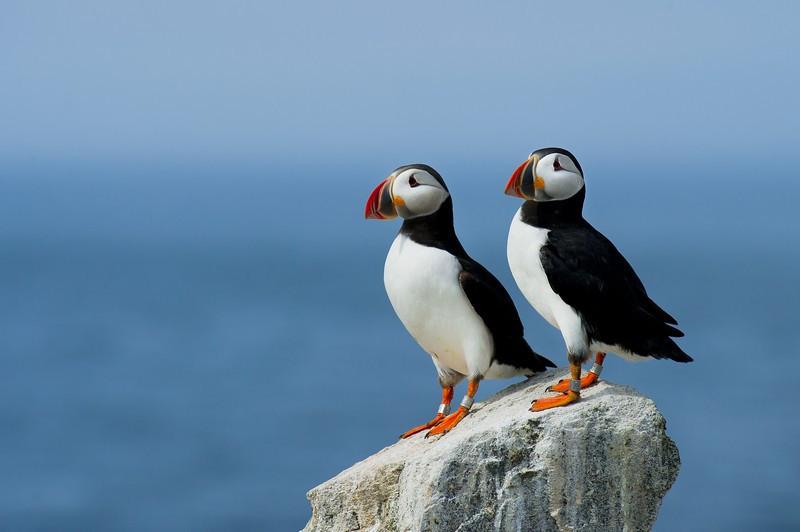 Фотообои Птицы на скале