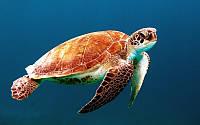 Фотообои Черепаха 1