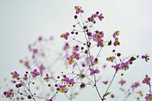 Фотошпалери Фіолетові квітки