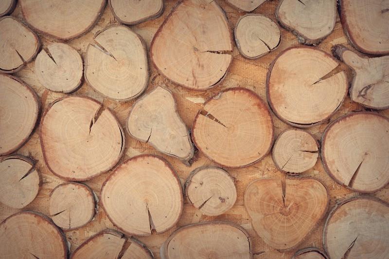 Фотообои Деревянные пенечки