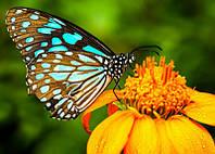 Фотообои Бабочка и цветок