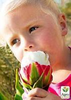 Эксклюзив! Мастер класс «Выращивание тюльпанов от А до Я», 10 уроков