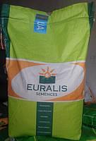 Семена подсолнечника ЕС Петуния Евралис Семанс