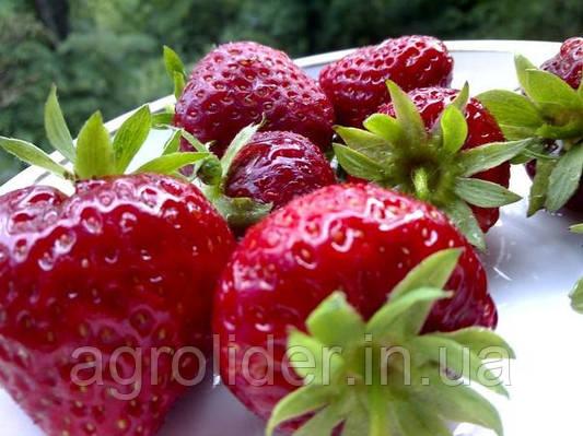 Как выращивать землянику на балконе