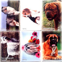 Карманные календарики на  2018 год Породы собак