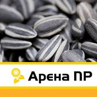 Сингента Арена ПР