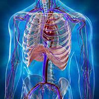 Фитокомплексы по системам организма