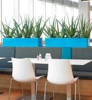 Озеленение офисов,магазинов,ресторанов.