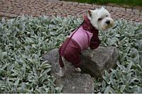 Дождевик для собаки с капюшоном для разных пород