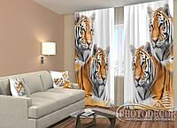 """ФотоШторы """"Тигры"""" 2,5м*2,6м (2 полотна по 1,30м), тесьма"""
