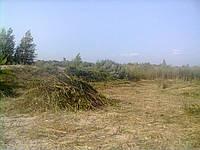 Скос травы. Стрижка травы. Покос камыша. Скашивание травы. Выкос травы. Услуги покоса травы. Скосить траву.