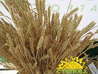 Семинар по озимой пшенице 2017 г