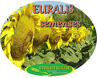 Семена подсолнечника ЕС Флоримис под Евро Лайтинг