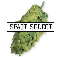 Хмель Spalt Select (DE) 2018 - 50г