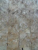 Шпон корень ясень оливковый, фото 1
