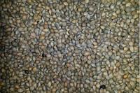 Семена Антипки