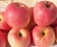 Яблуня Фуджи