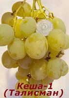 Виноград Кеша, фото 1