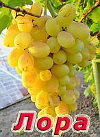 Виноград Лора, фото 1