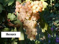 Виноград Находка
