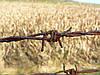 Тюремные земли могут отдать в пользование аграриям