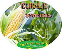 Семена кукурузы ЕС ГАРАНТ (ФАО 300)