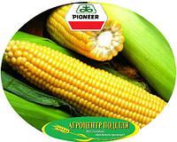 Семена кукурузы PR38N86 / ПР38Н86 ФАО 320 Пионер