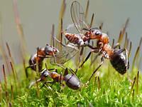 Корм для муравьев Белковый