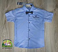 Рубашка голубая с коротким рукавом для мальчика